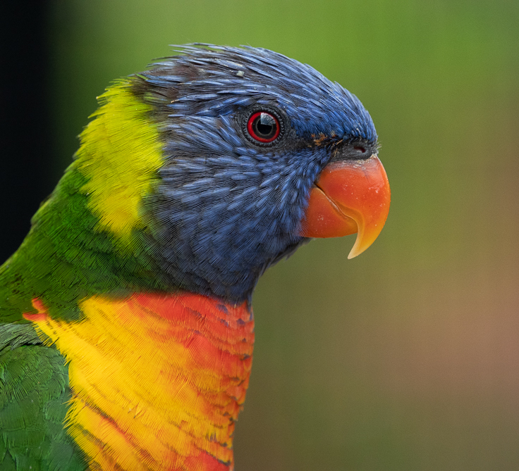 RX10 bird photography