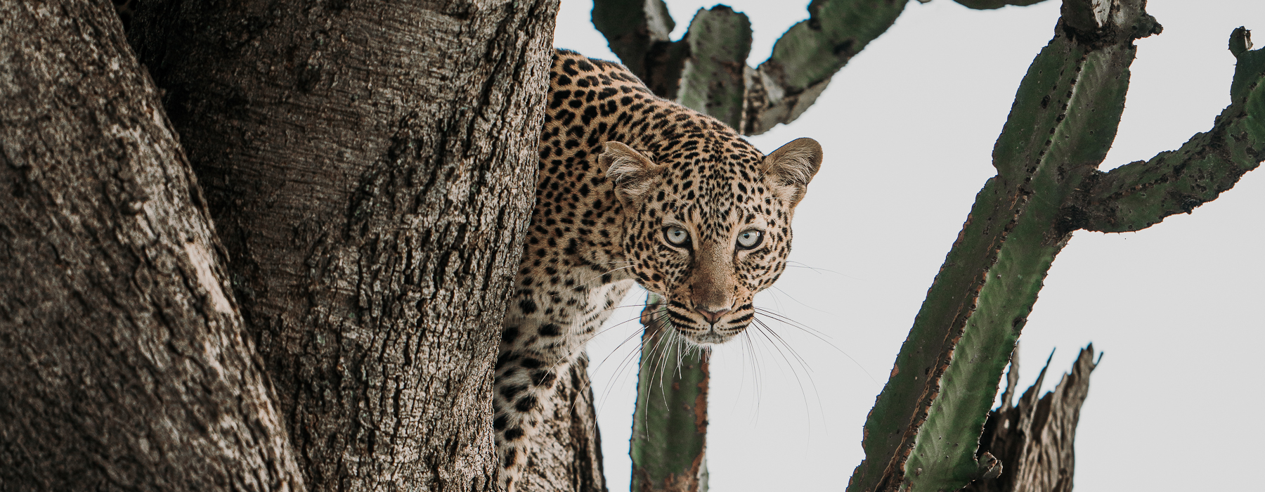 Top 10 settings for wildlife photography – Sony A7R4