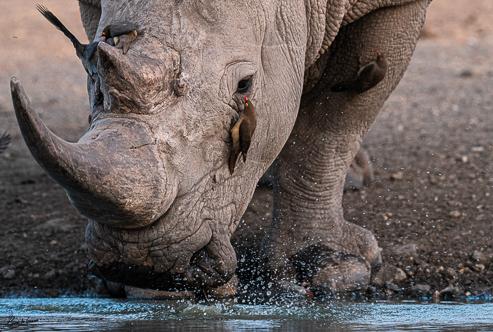 Safari Guide Training